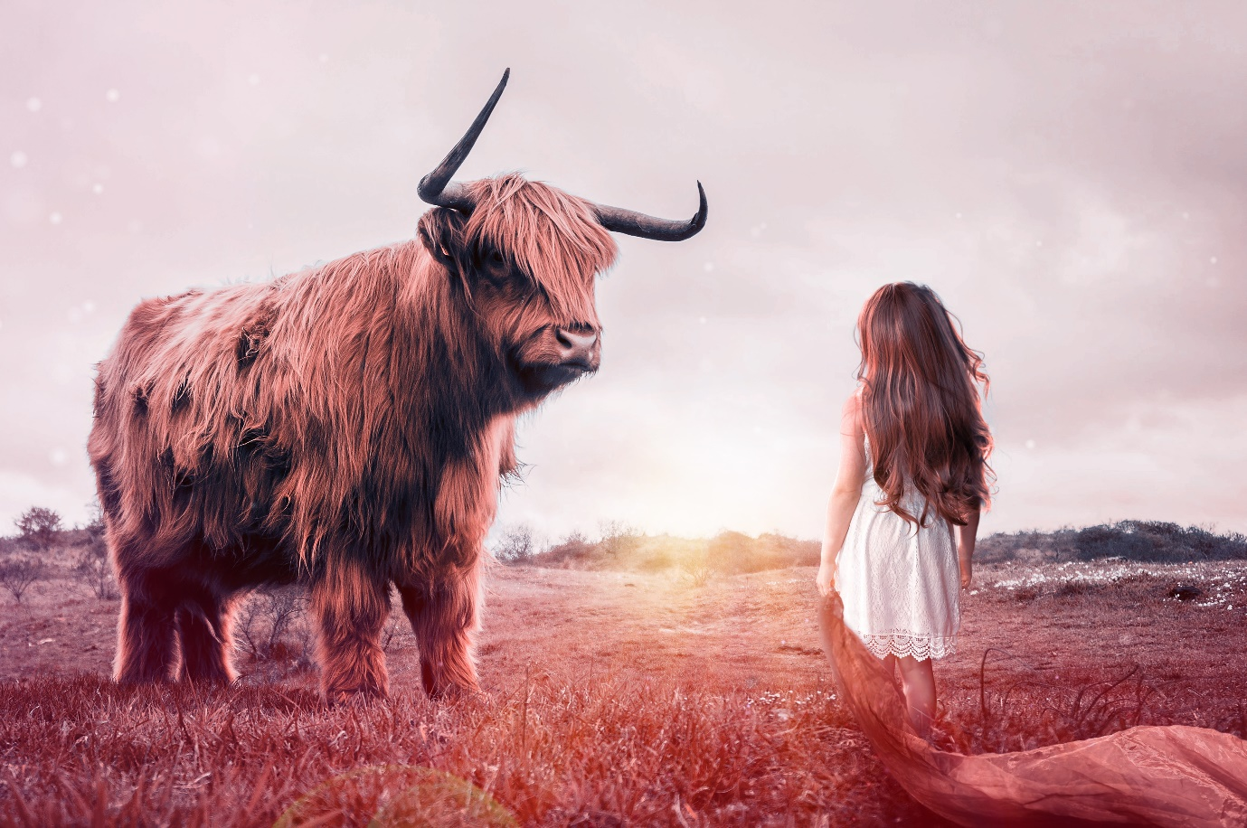 A person standing next to a yak Description automatically generated with low confidence
